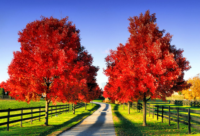 Get inspired scenic october oh so charming - Pics of fall scenes ...
